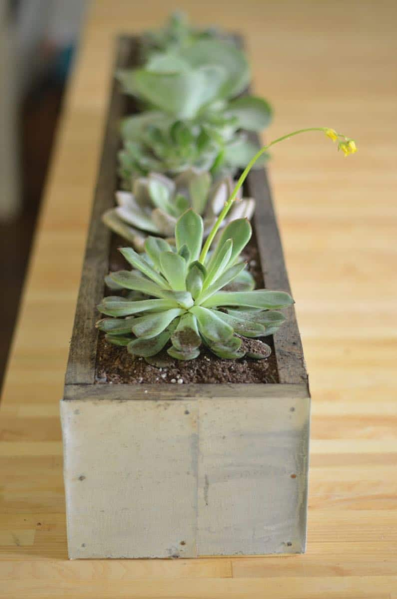 DIY succulent planter with zinc patina