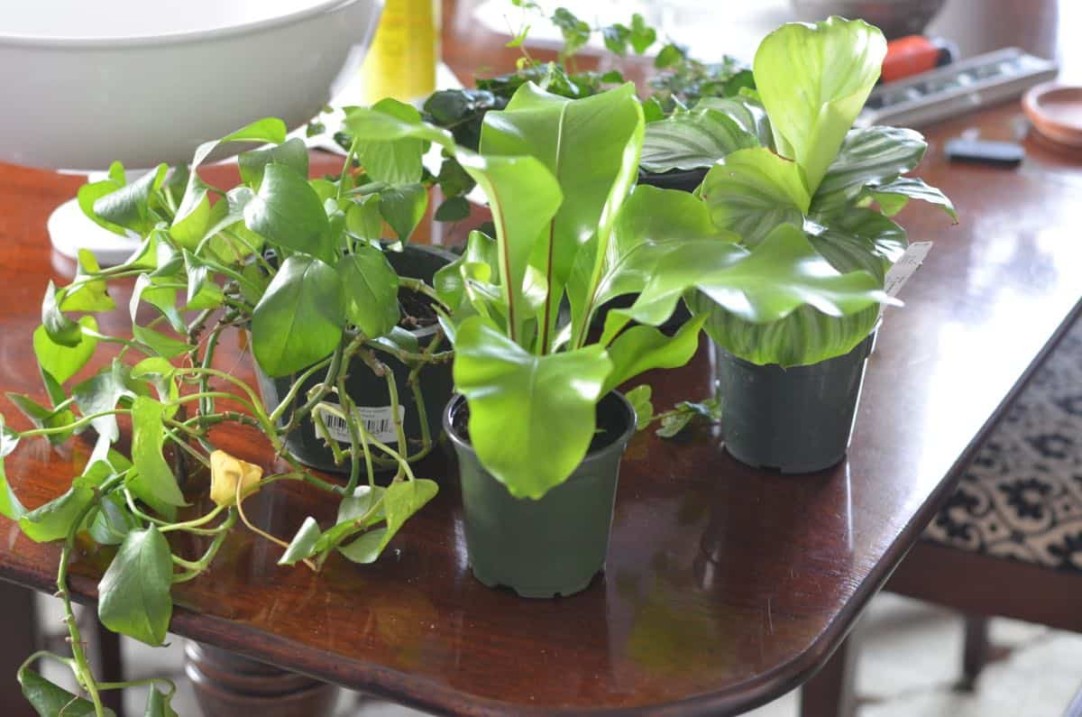 how to plant a lush and healthy terrarium
