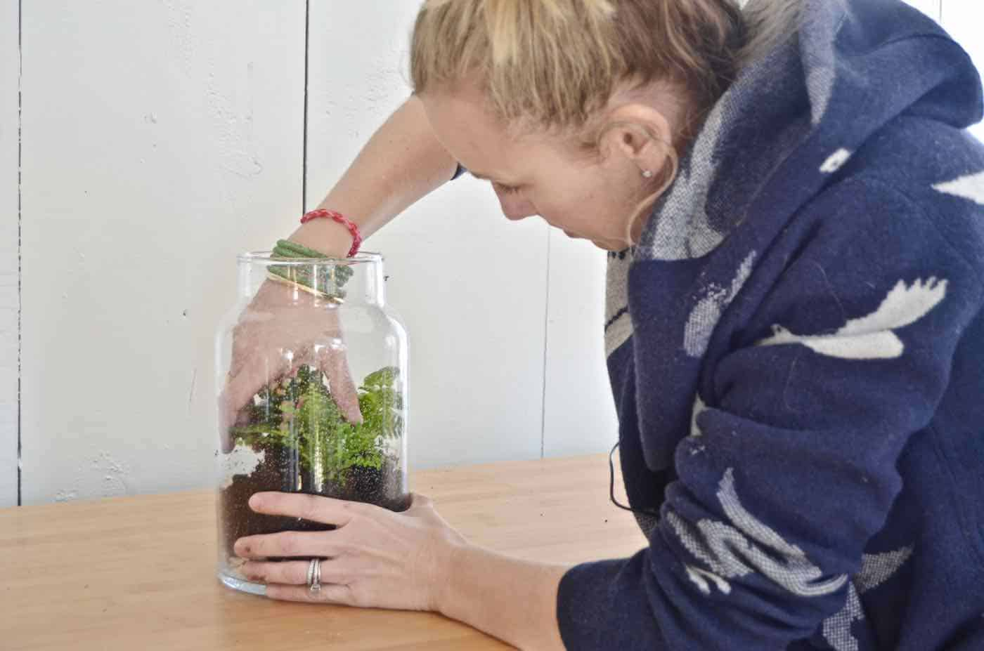 Plant your own lush green terrarium.