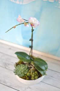 Orchid detail in succulent planter