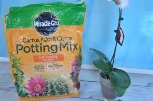 potting soil for succulent