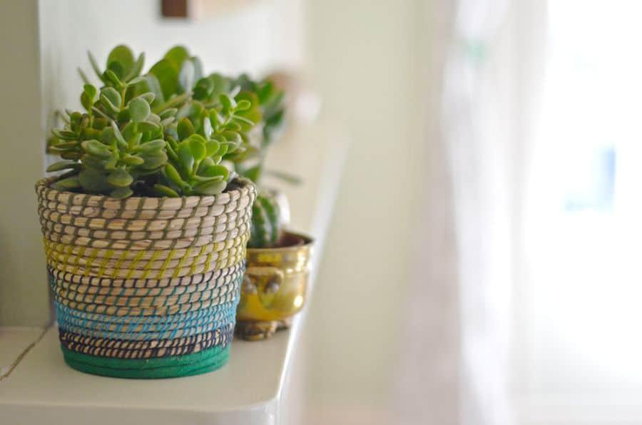 succulents on mantel