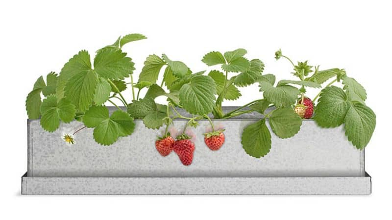 Strawberry Planter UG