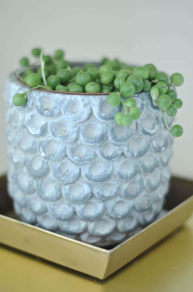 succulent in owl pot