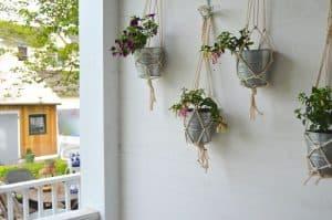 plants in macrame holders