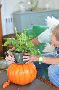 planting-fern-in-pumpkin-planter