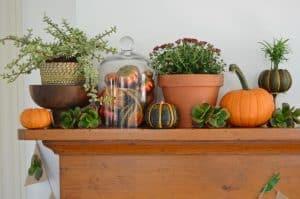 http://blog.homedepot.com/fall-mantel-decorations-succulents/
