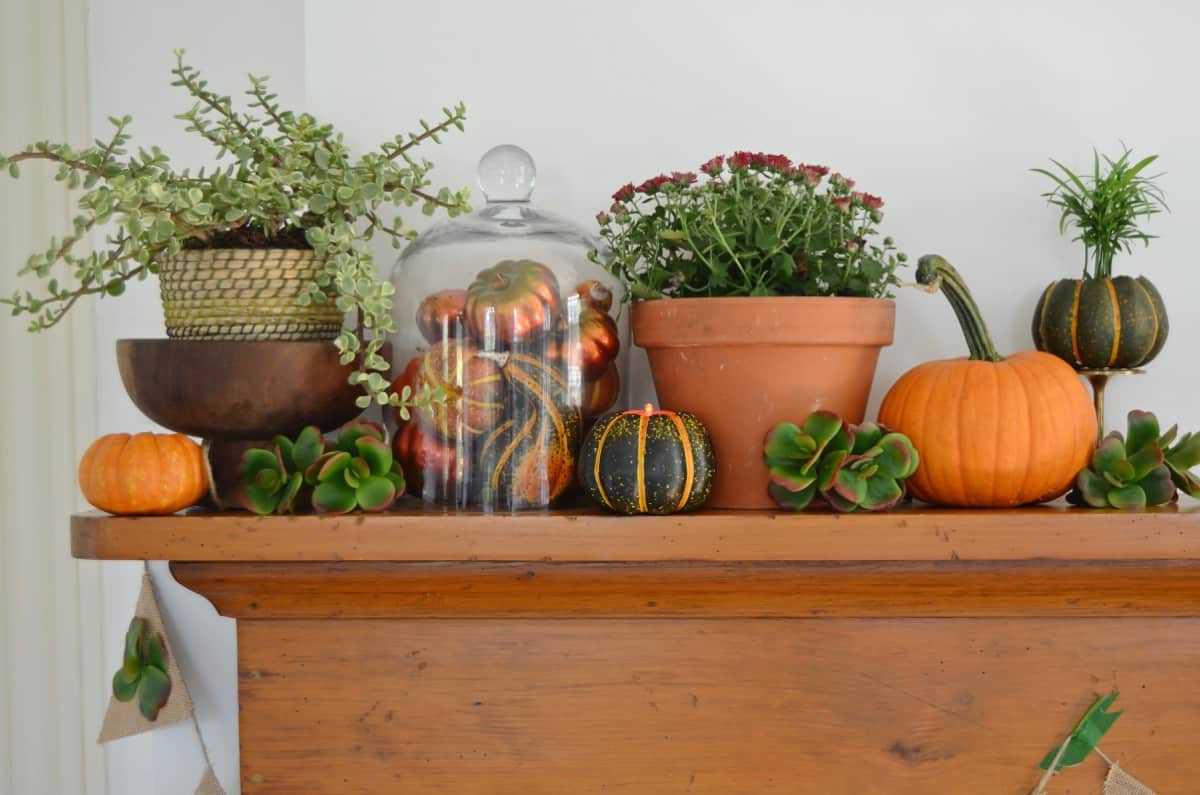 Fall harvest mantel with pumpkins and gourds and succulents.