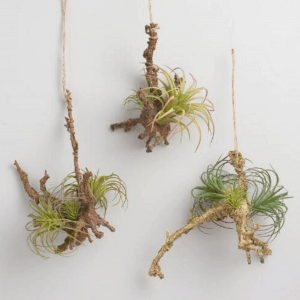 succulents on twig