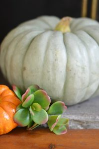 white-pumpkin-with-succulent