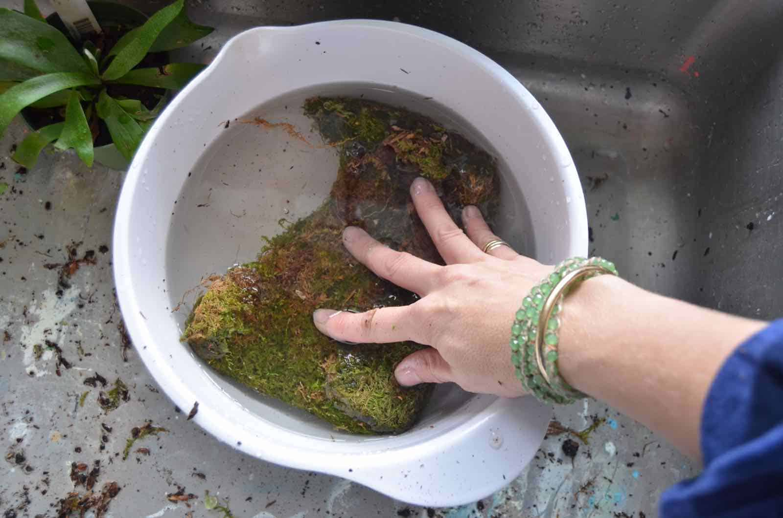 DIY Kokedama moss ball tutorial.