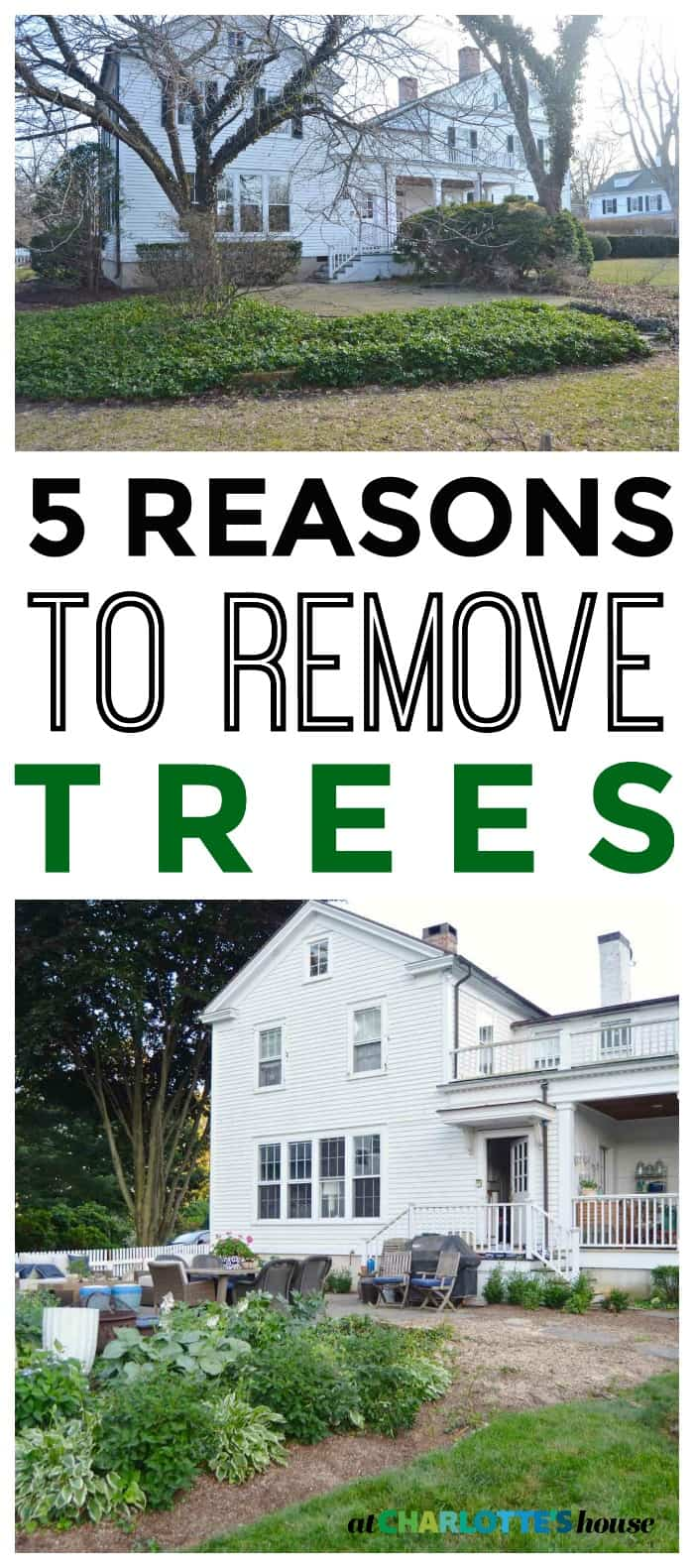 5 reasons to consider when deciding whether or not to remove a tree on your property.