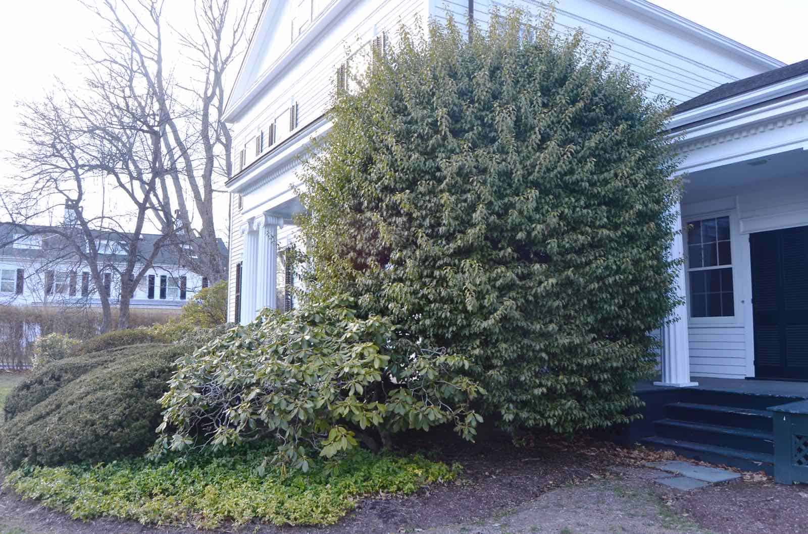 5 reasons to remove trees on your property