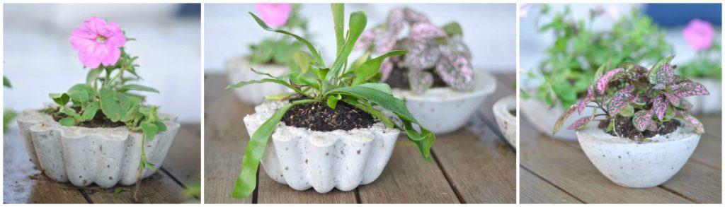 DIY Budget Concrete Planters