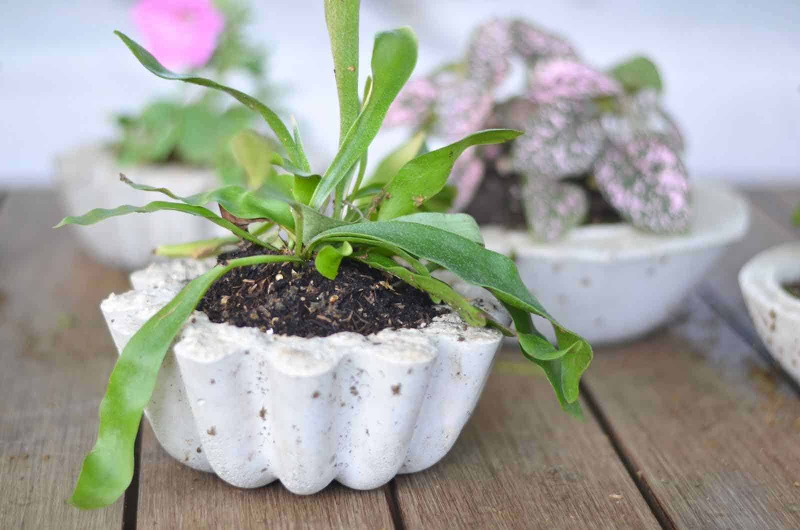 Make these amazing DIY concrete planters for under an hour.