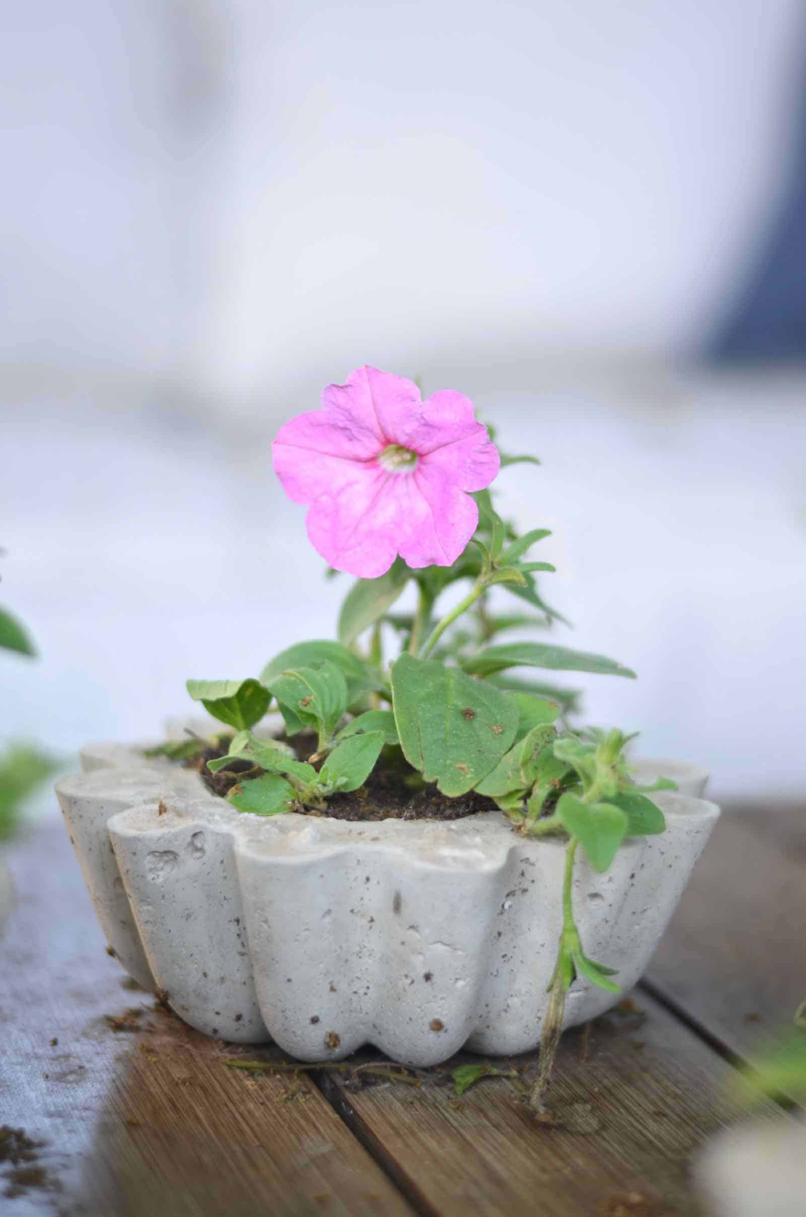 Make these amazing DIY concrete planters in under an hour for $5.