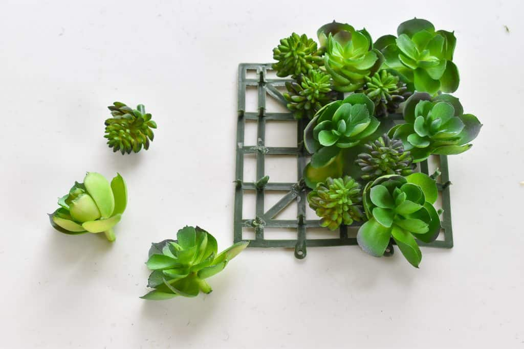 succulents for wreath
