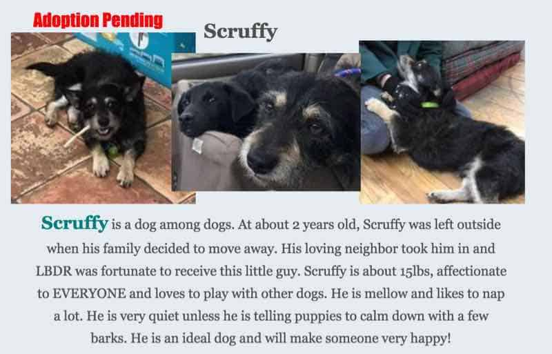 scruffy little black dog rescue