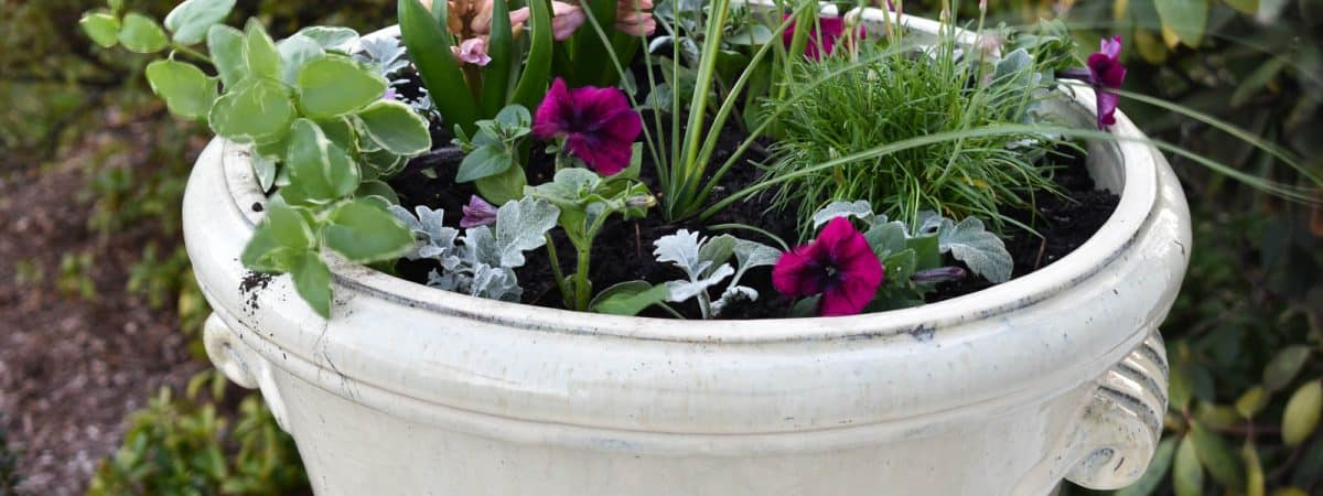 Refreshing Planters for Spring the Lazy Way