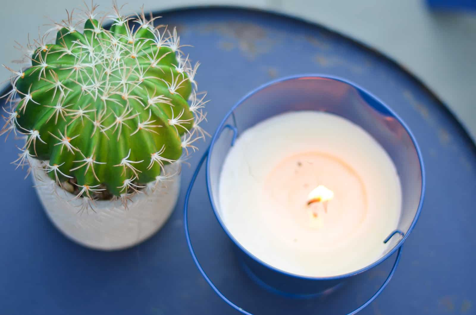 citronella candle with cactus