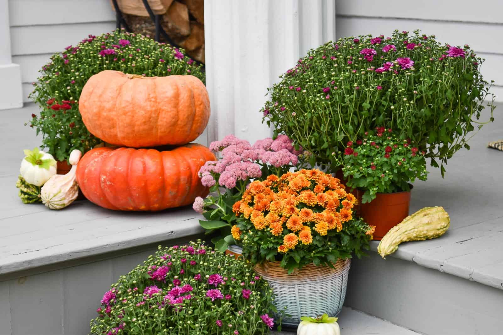 mums and pumpkins on our porch