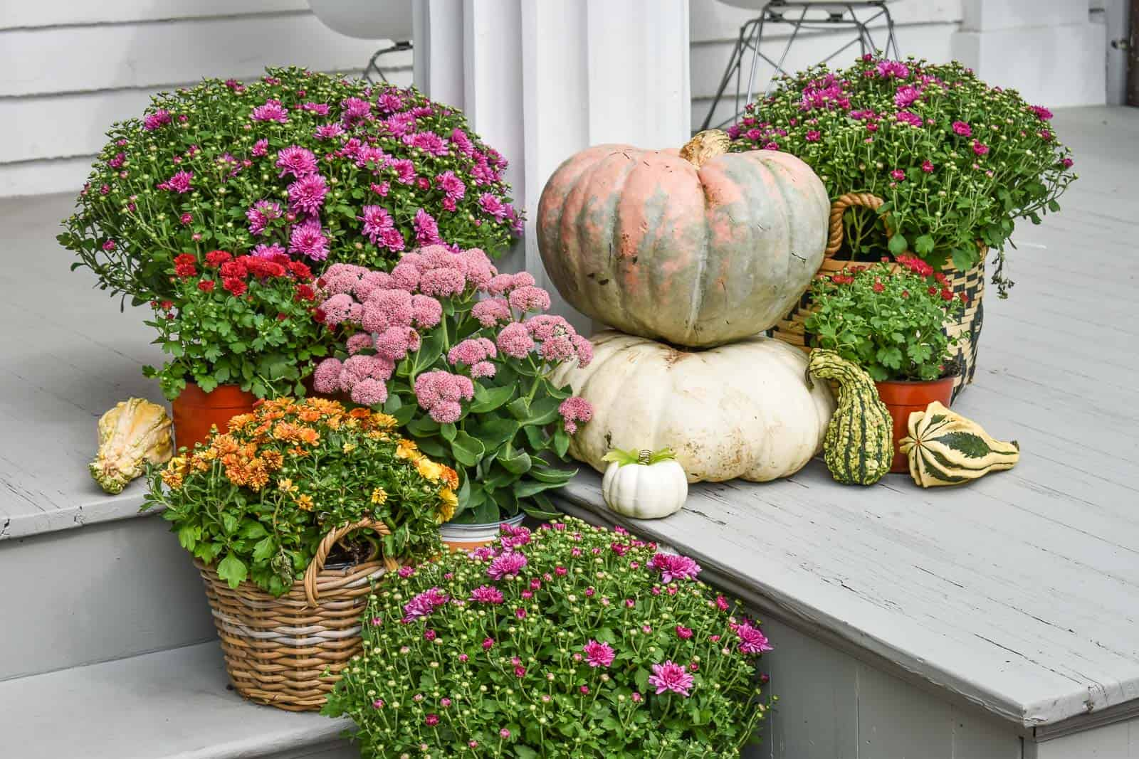 pumpkins and mums for fall