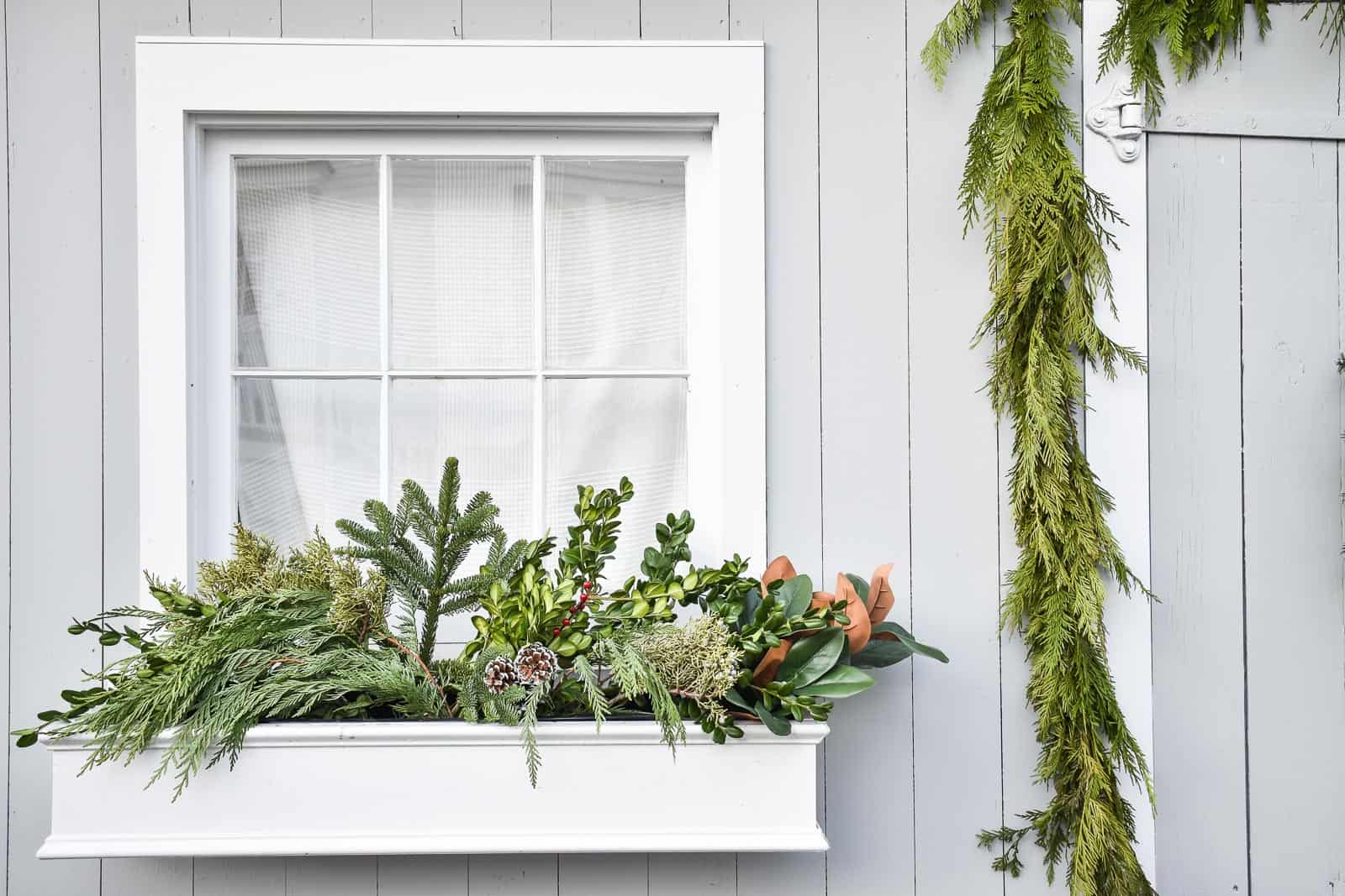 greenery in window boxes