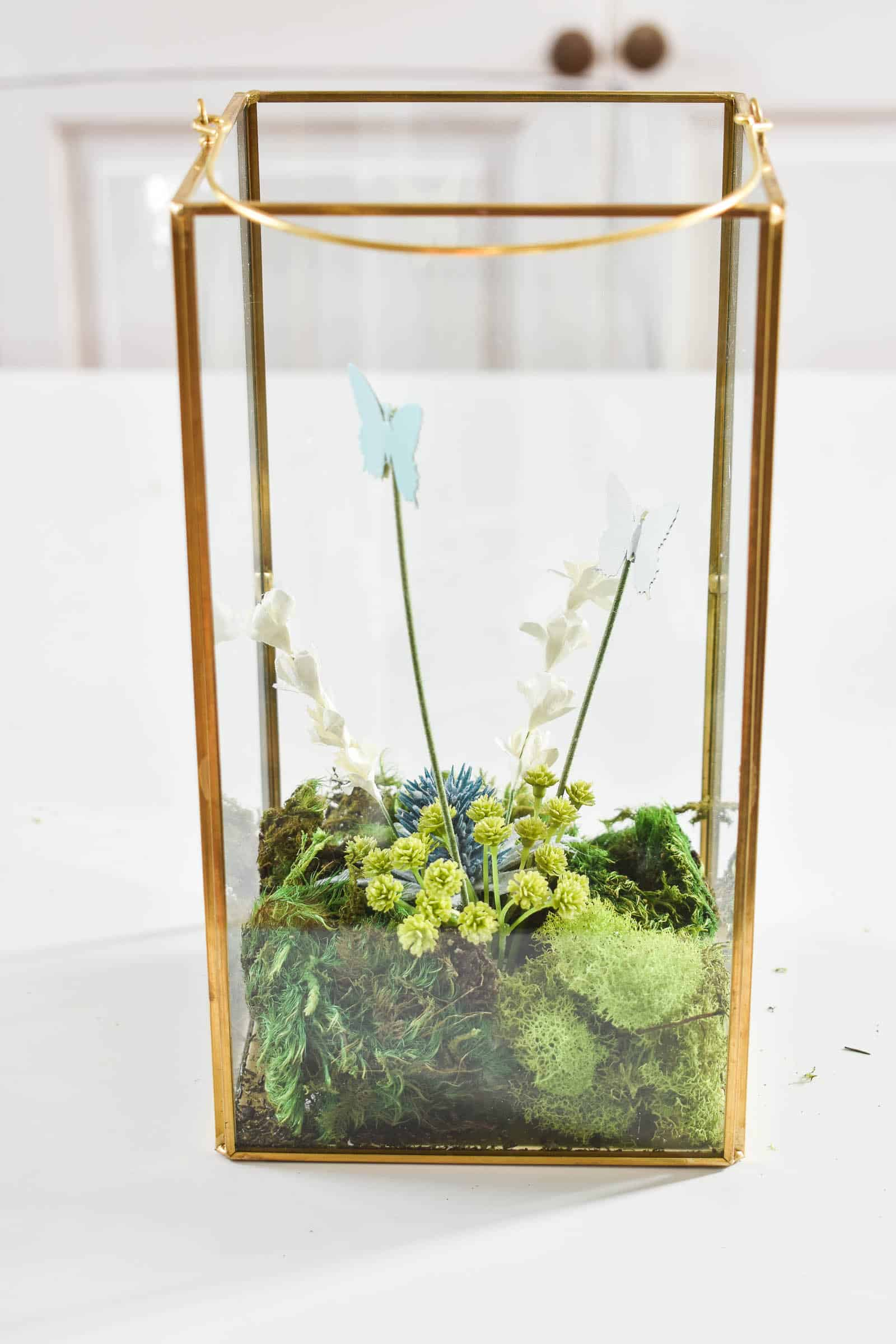larger terrariums in lanterns
