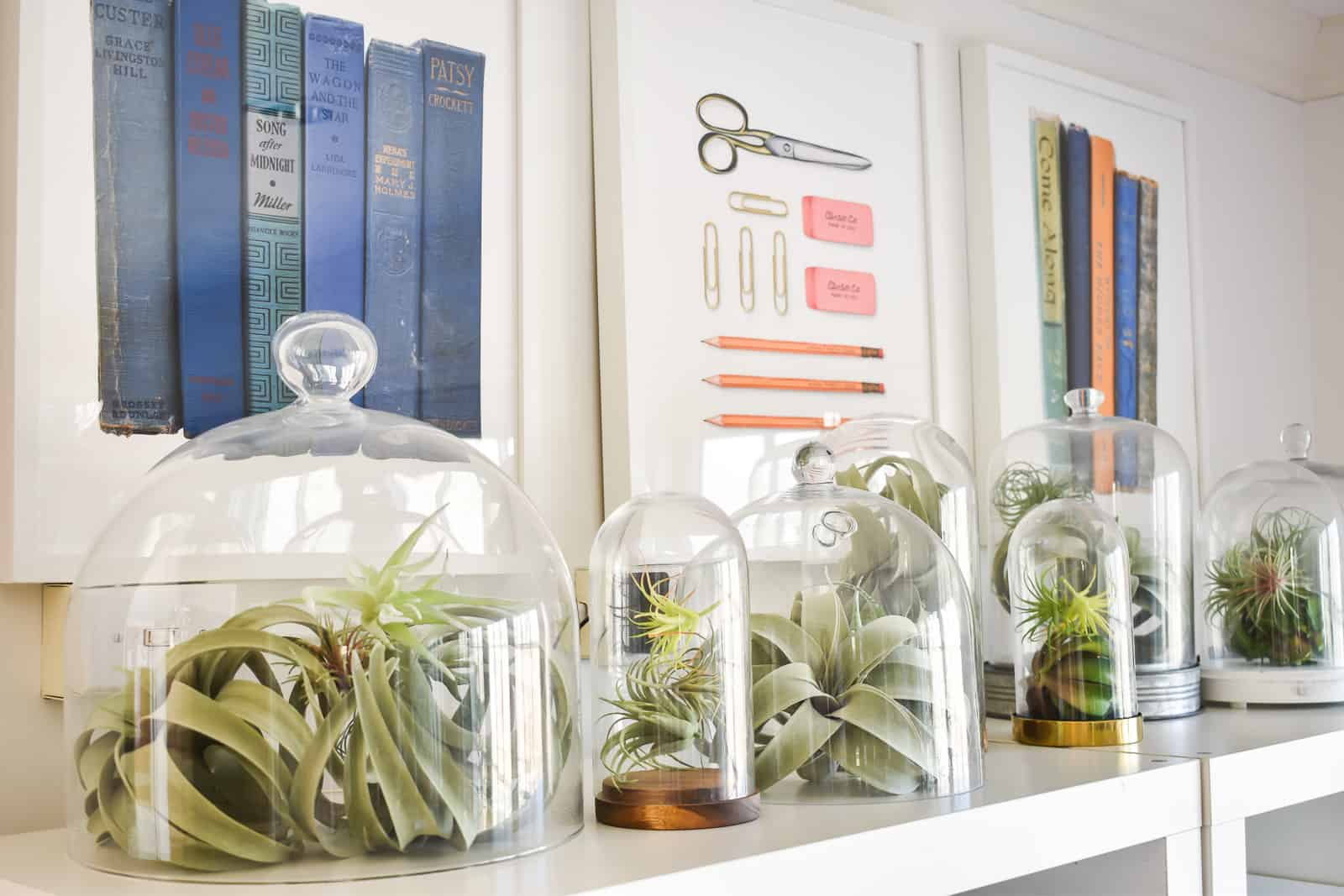 air plants in bell jar