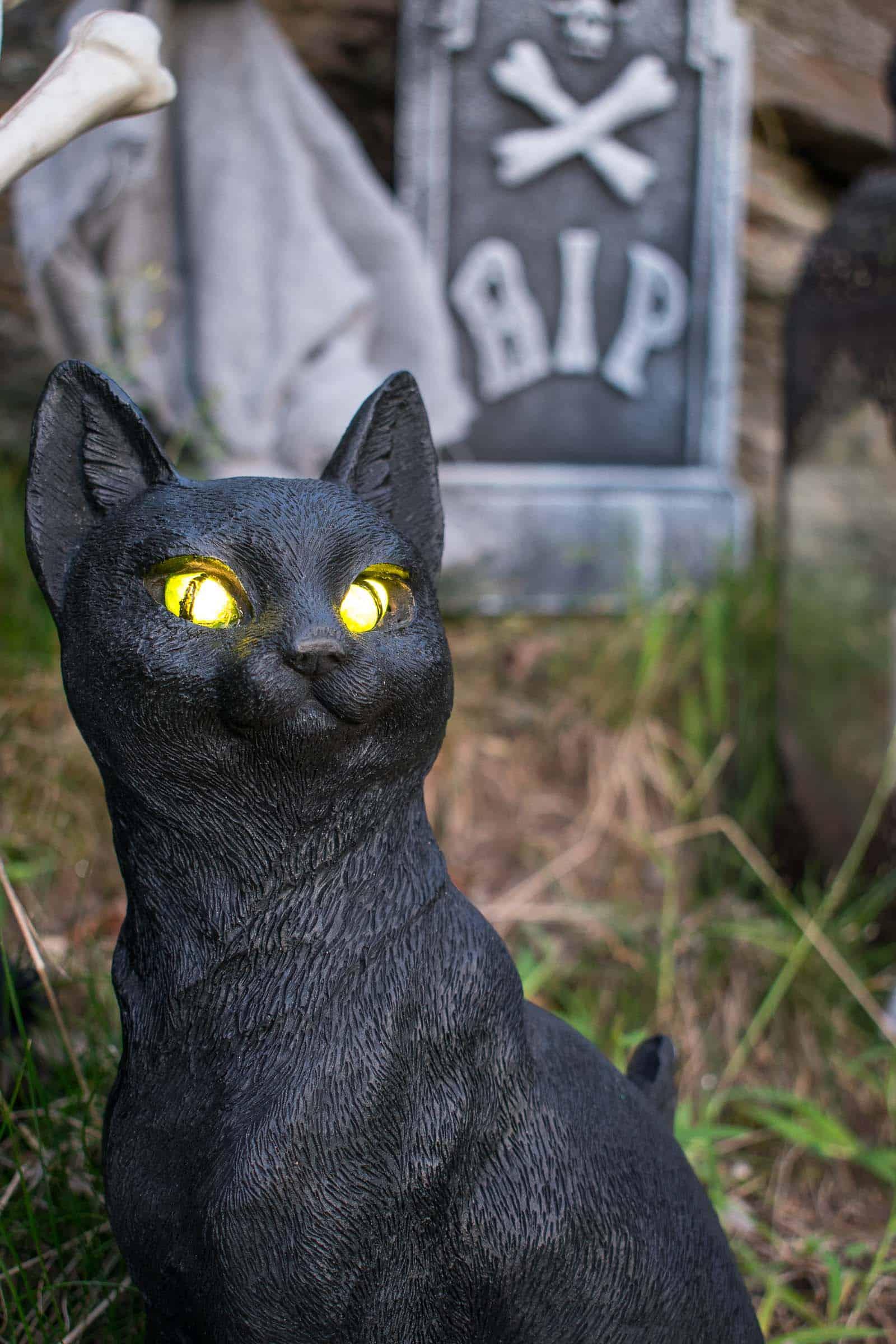 black cat decor for halloween
