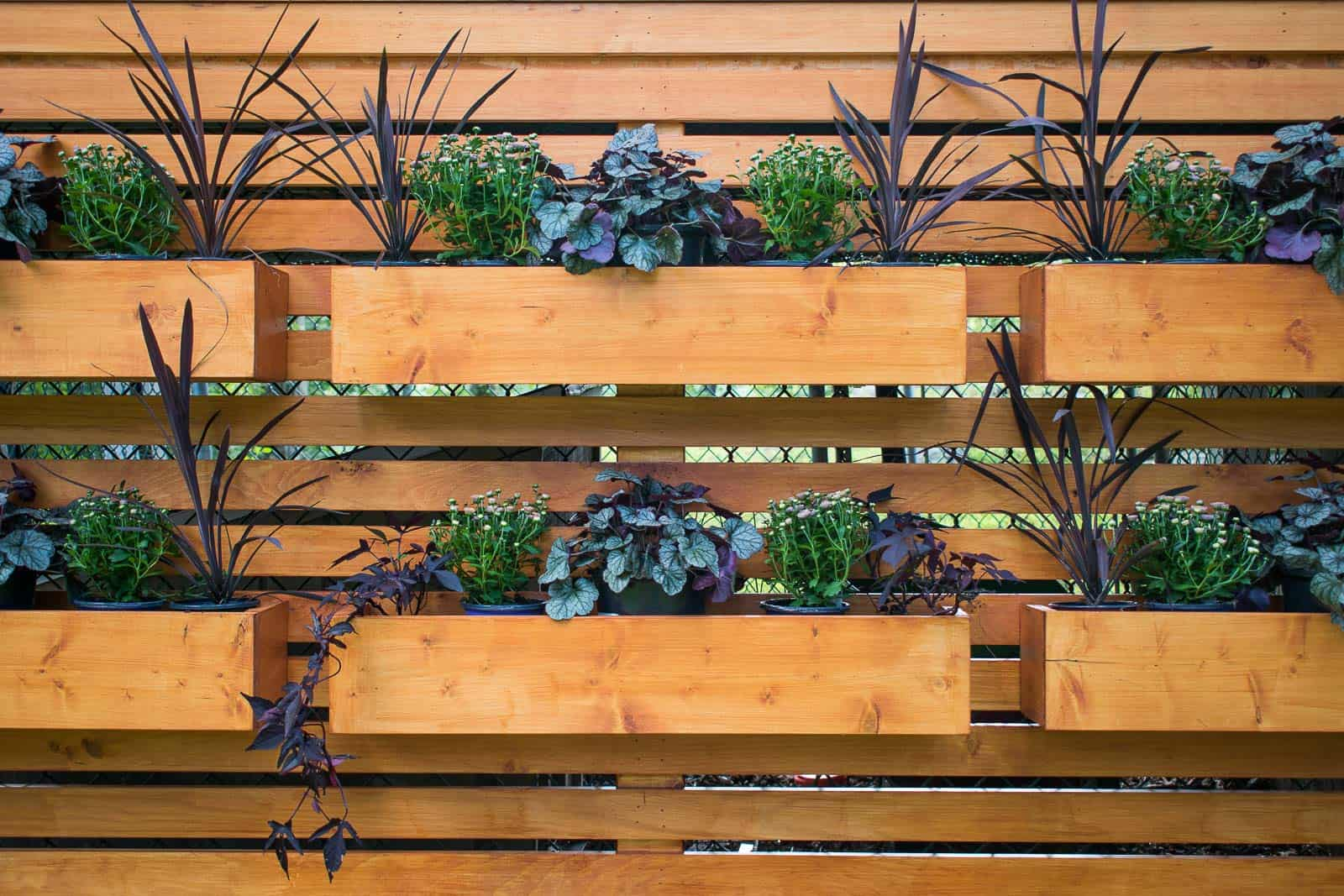 planters on wooden privacy wall