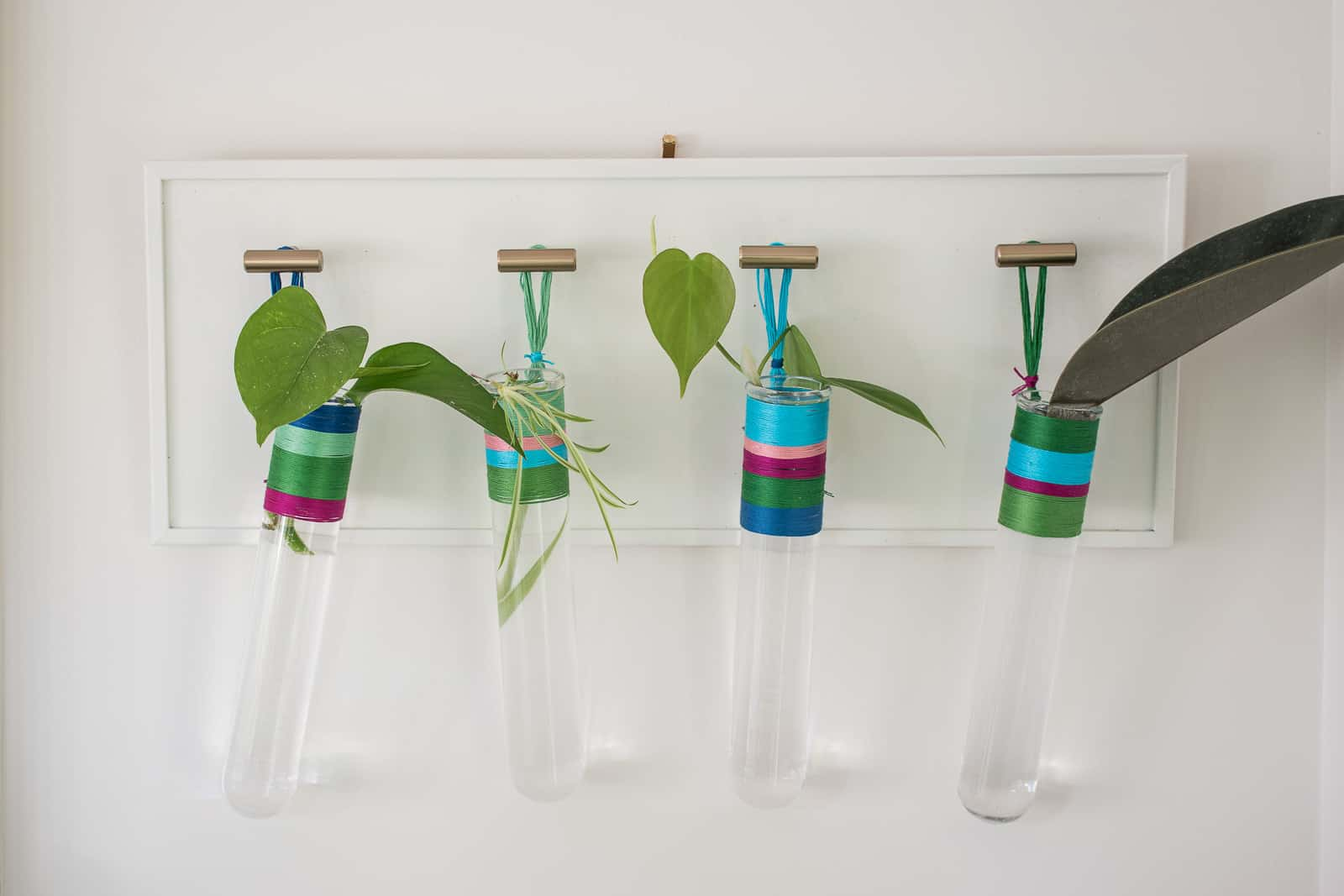 colorful wrapped propagation tubes