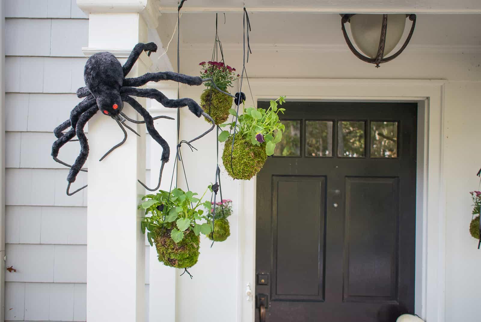hanging kokedama fall plants