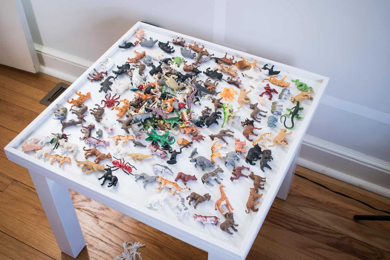 lay out animals on table top