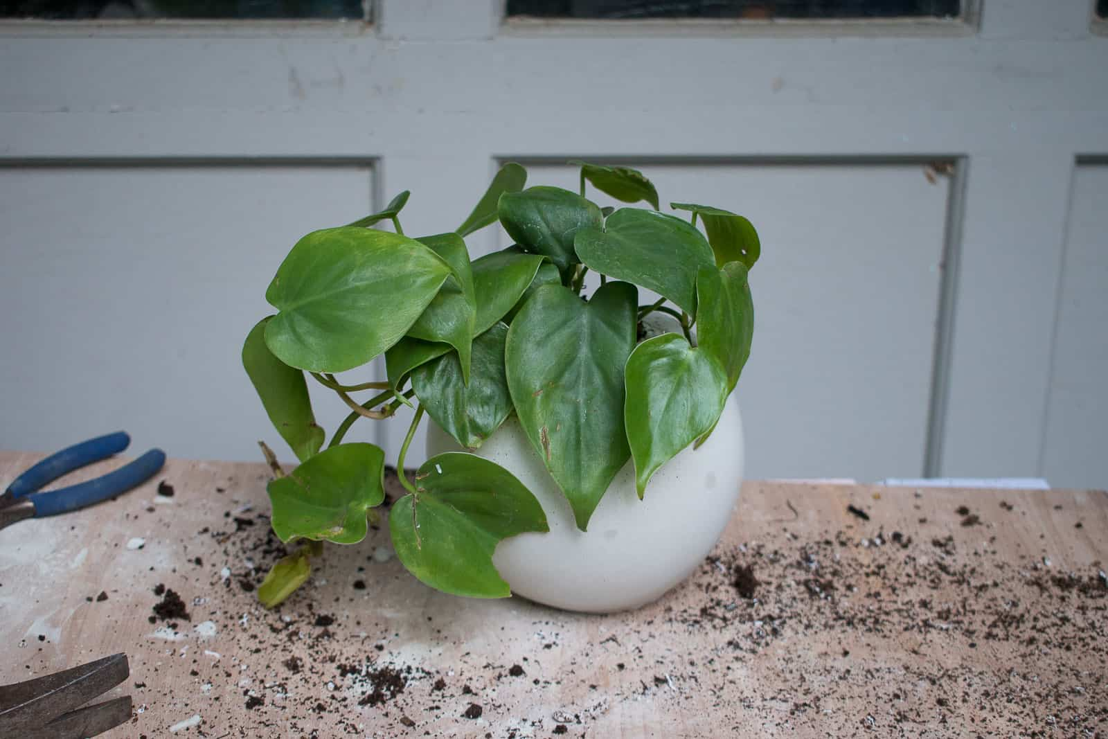 add plants to concrete mold