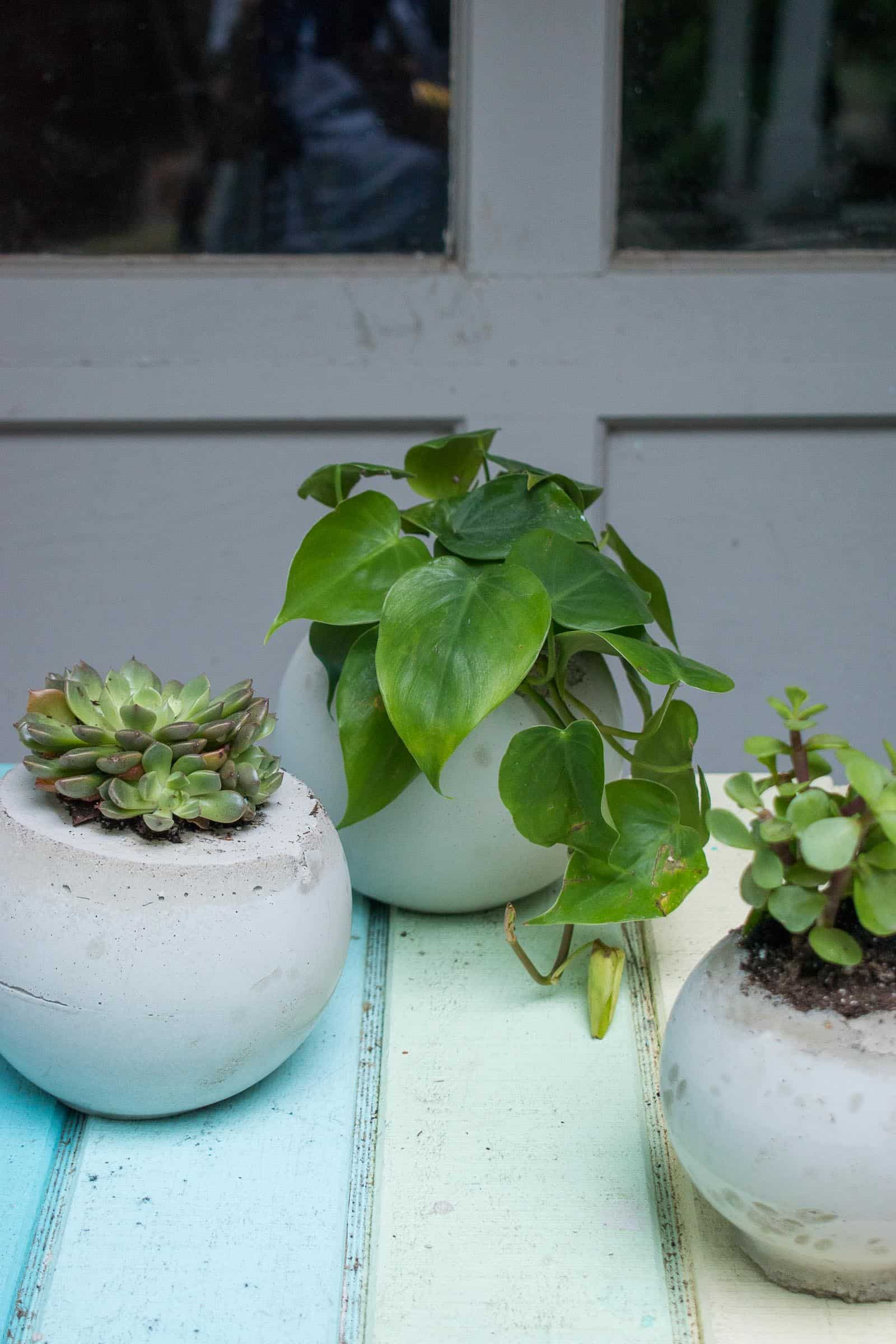 cement ball planters