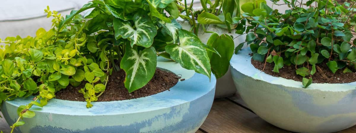How to Make a Dyed Cement Planter