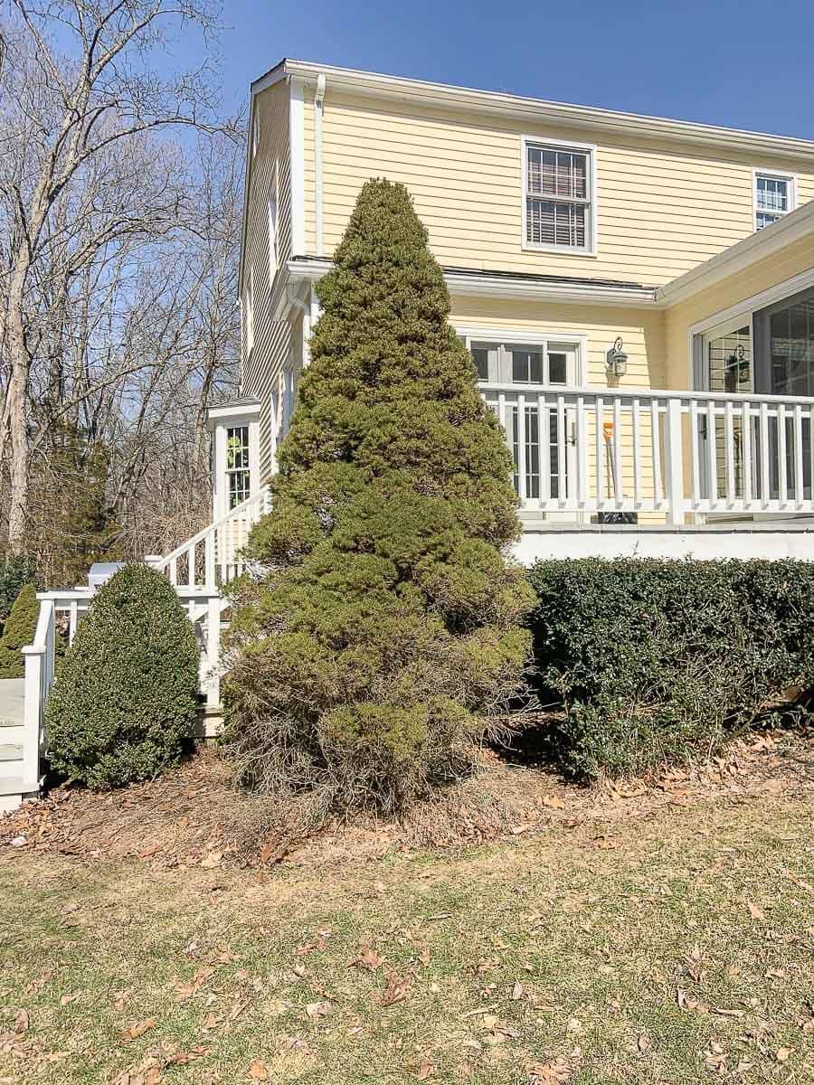 tree off back deck