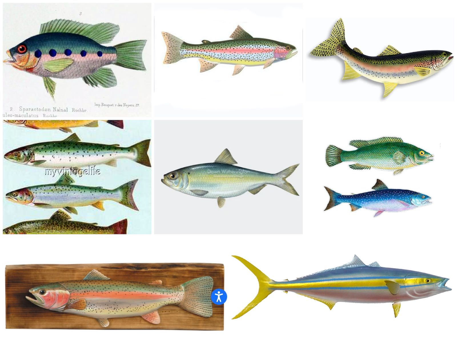 images of fish inspo